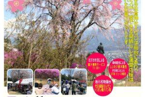 佐倉神社 桜まつり